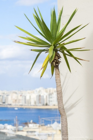 Malta Penthouse Dachterrasse Bepflanzung 2